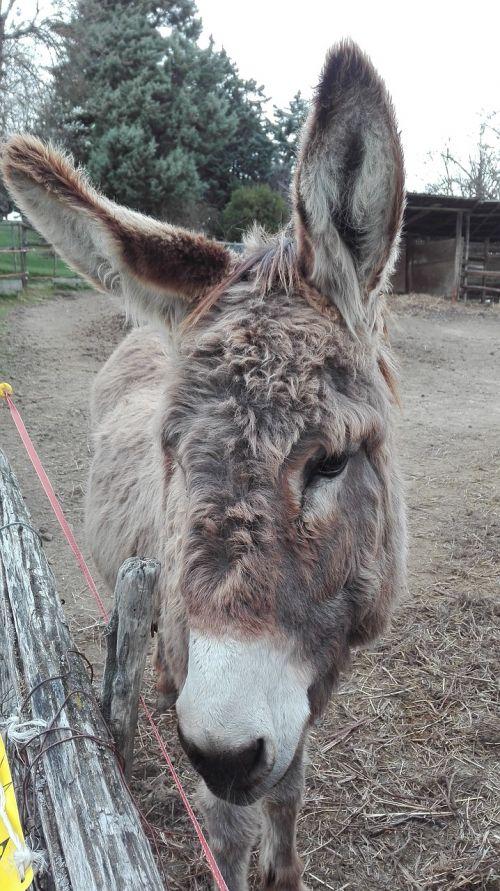 donkey eyes sweets