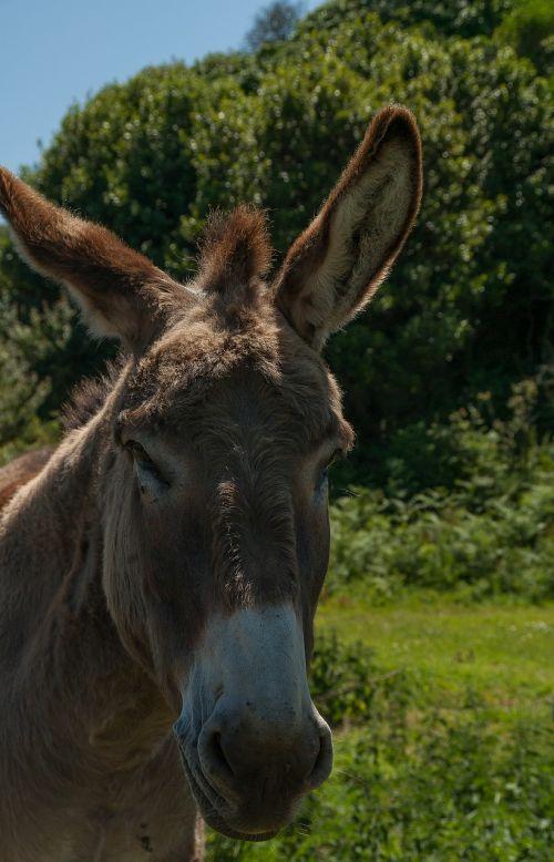 donkey equine domestic animal