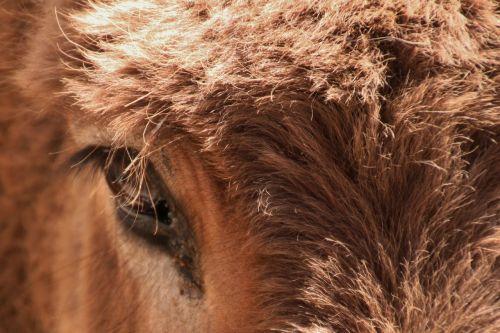 donkey animal head