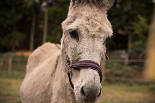 donkey nature coupling