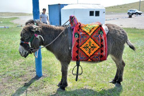 donkey animals animal