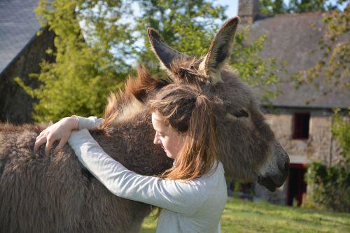 donkey colt girl
