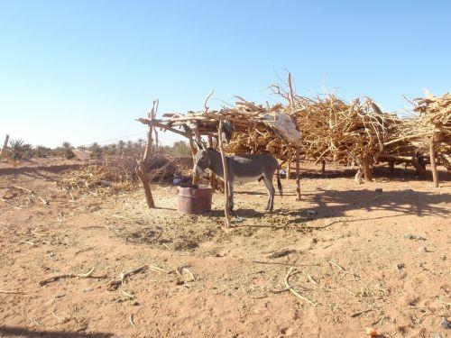 donkey desert morocco