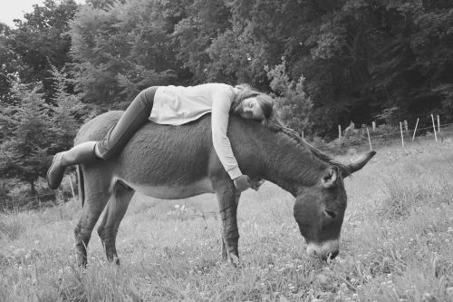 donkey girl young woman