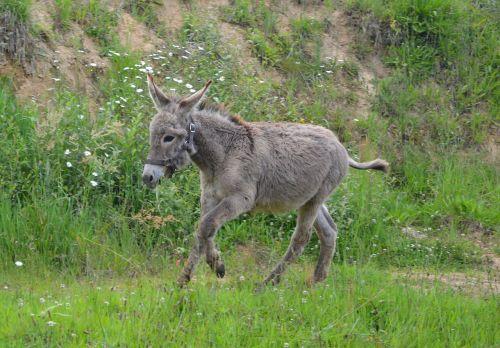 donkey colt run