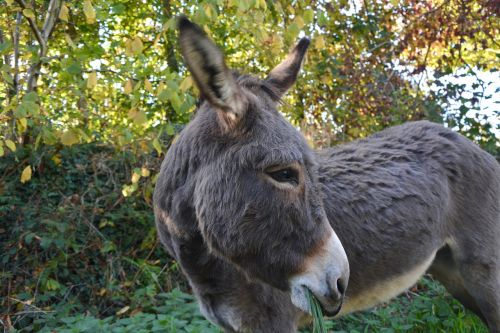 donkey equine domestic animal