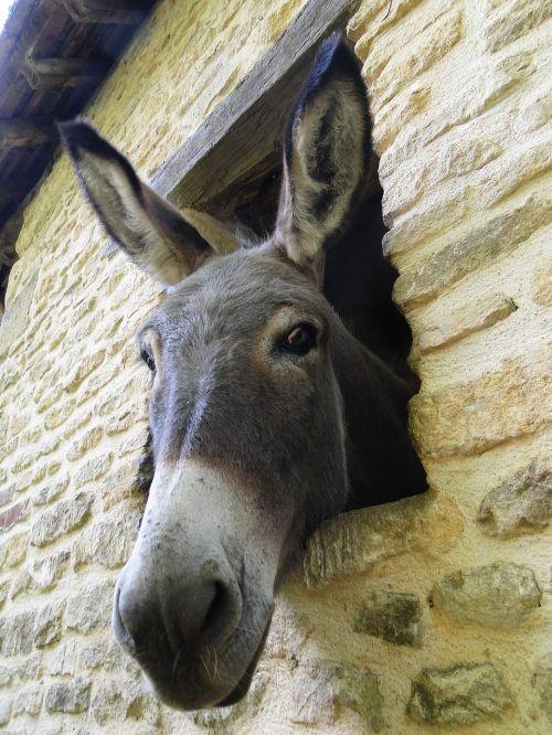 donkey look nice
