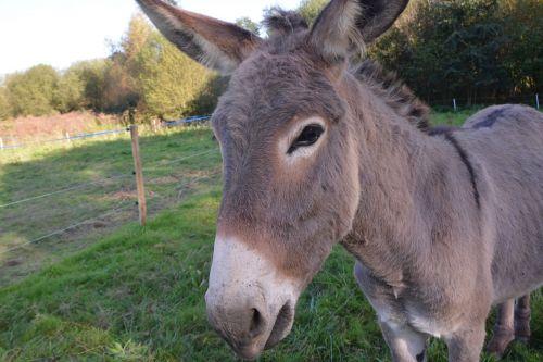 donkey colt nanon