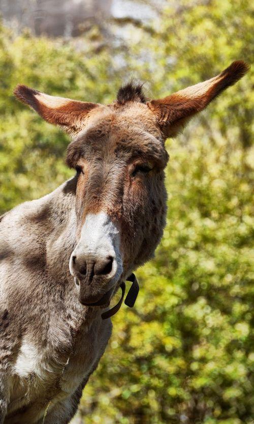 donkey animal animals