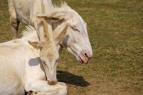 donkey  horse  baby