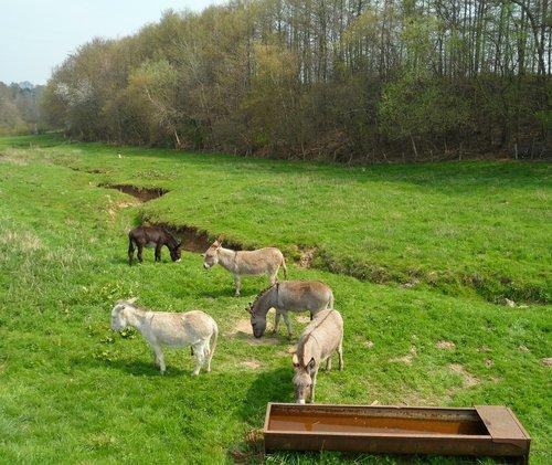 donkey  pre  prairie