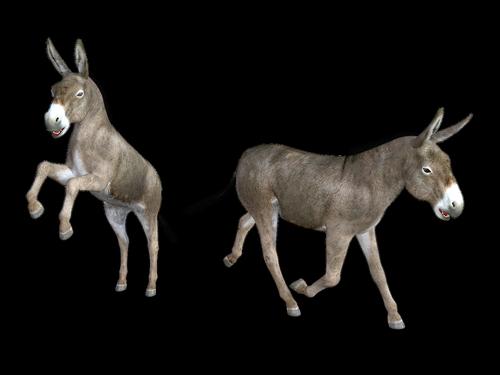 donkey  horse  mule