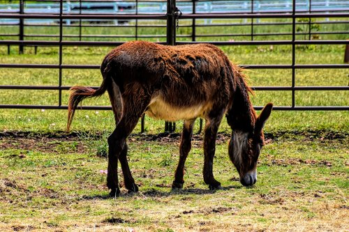 donkey  farm  livestock