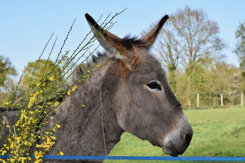 donkey  colt  equine