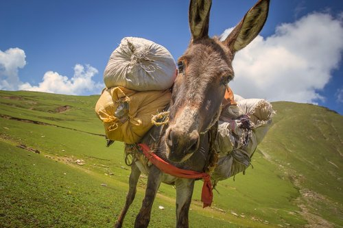donkey  donkey with weight  a donkey carrying luggage