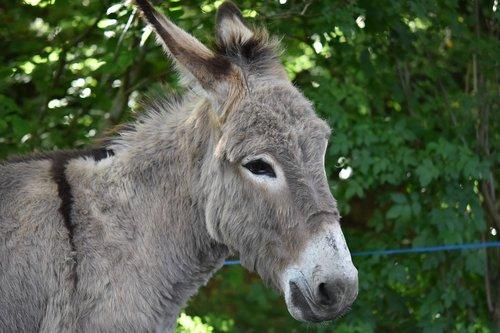 donkey  ass gutter  ass croix saint andré