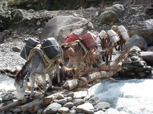 donkey transport nepal