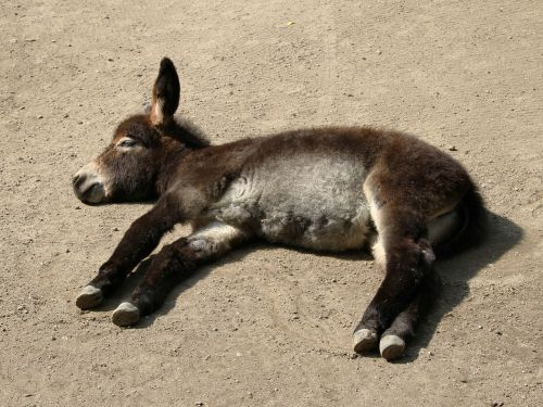 donkey young animal concerns