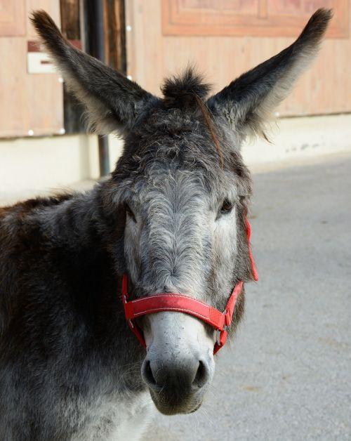 donkey donkey head head
