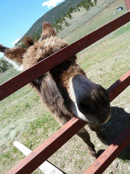donkey fence face