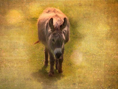 donkey animal mammal
