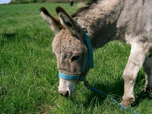donkey ass meadow