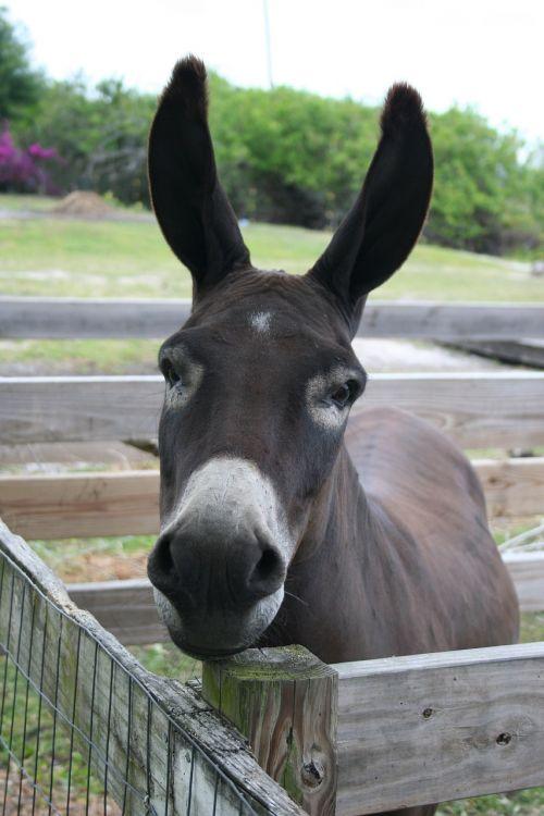 donkey burro head