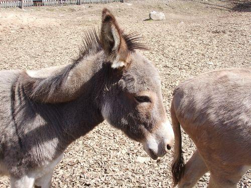 donkey animal zoo