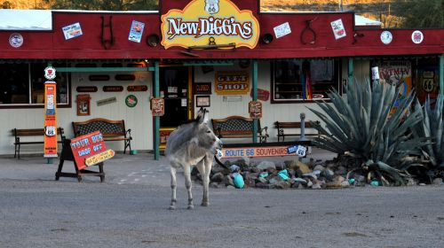 Donkey And Route 66 Gift Shop