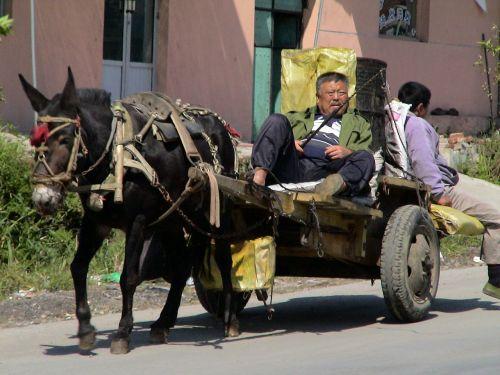donkey carts companions drive