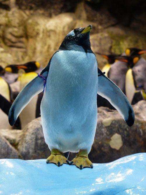 donkey penguin penguin attention