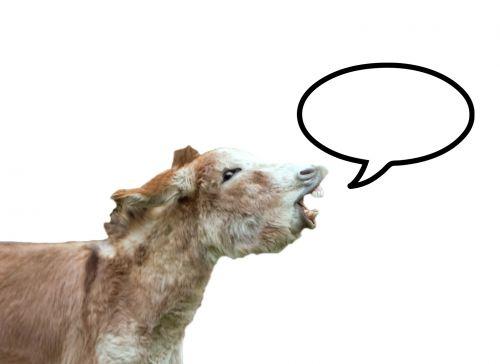 Donkey With Speech Bubble