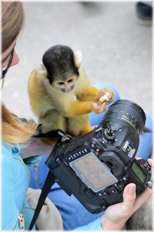 Squirrel Monkeys 4