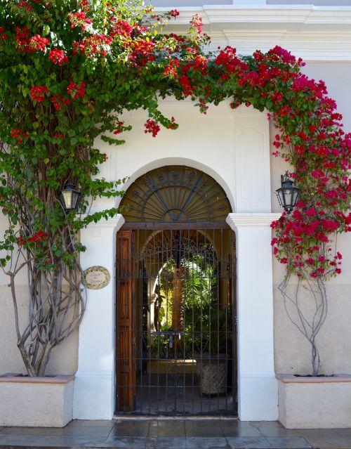 door colonial poplars