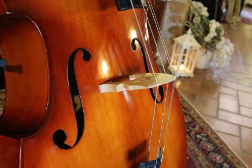 double bass musical instruments archi