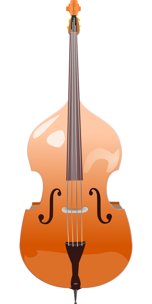 double bass stringed instrument musical instrument