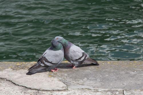 dove turtle dove love