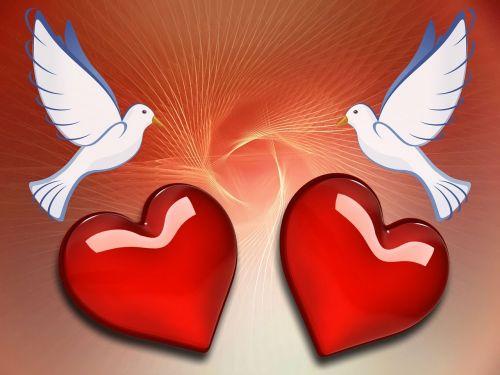 dove heart love
