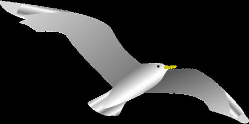dove naval bird