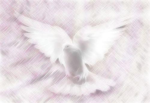 dove stationary background
