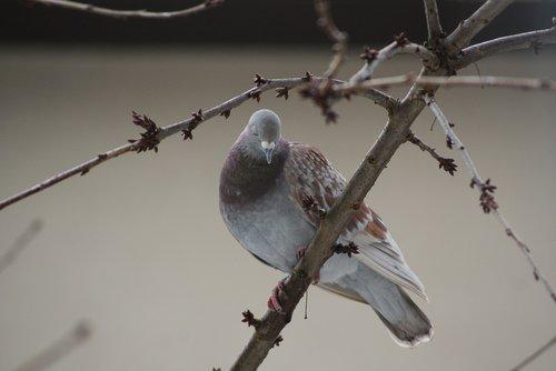 dove  home  dashing
