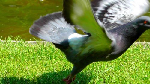 dove departure movement