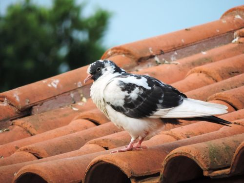 dove roof nature