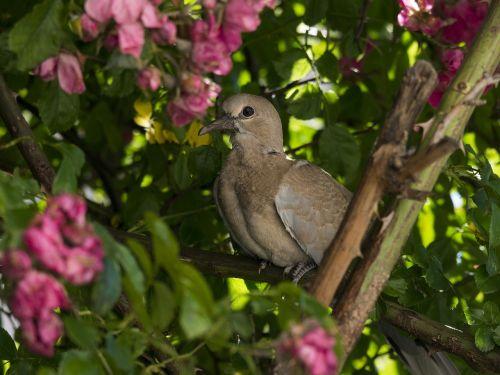 dove flower pink