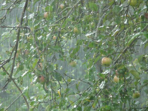downpour rainstorm rain
