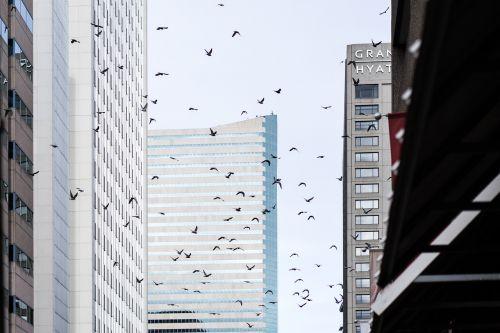 downtown birds city