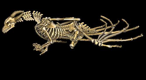 dragon skeleton wings