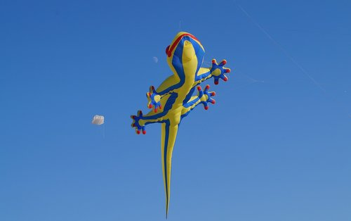 dragon  shackle dragon  kite