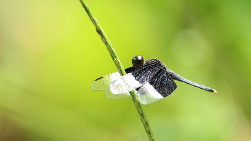 dragon fly  insect  nature