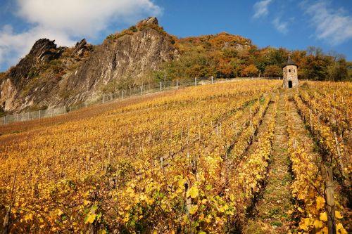 dragon rock vineyard siebengebirge